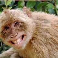 """Bài học từ câu chuyện """"Con Khỉ"""" cho các nhà đầu tư"""